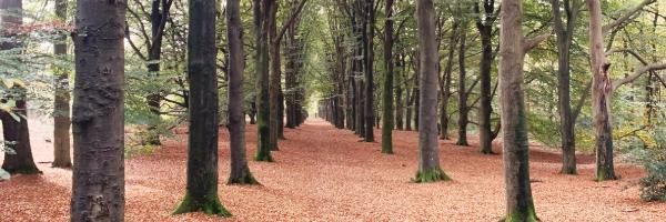 De herfst reflectie: Scrum en Herfst